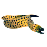 Gold Flecked Eel by Ulfrheim