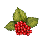 Redcurrants by Ulfrheim