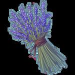 Cluster of Lavender by Ulfrheim