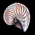Nautilus Shell by Ulfrheim