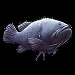Grouper Fish by Ulfrheim
