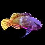 Dottyback Fish by Ulfrheim