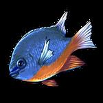 Damsel Fish by Ulfrheim