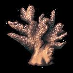 Chunk of Coral by Ulfrheim