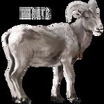 Hhrutr by Ulfrheim