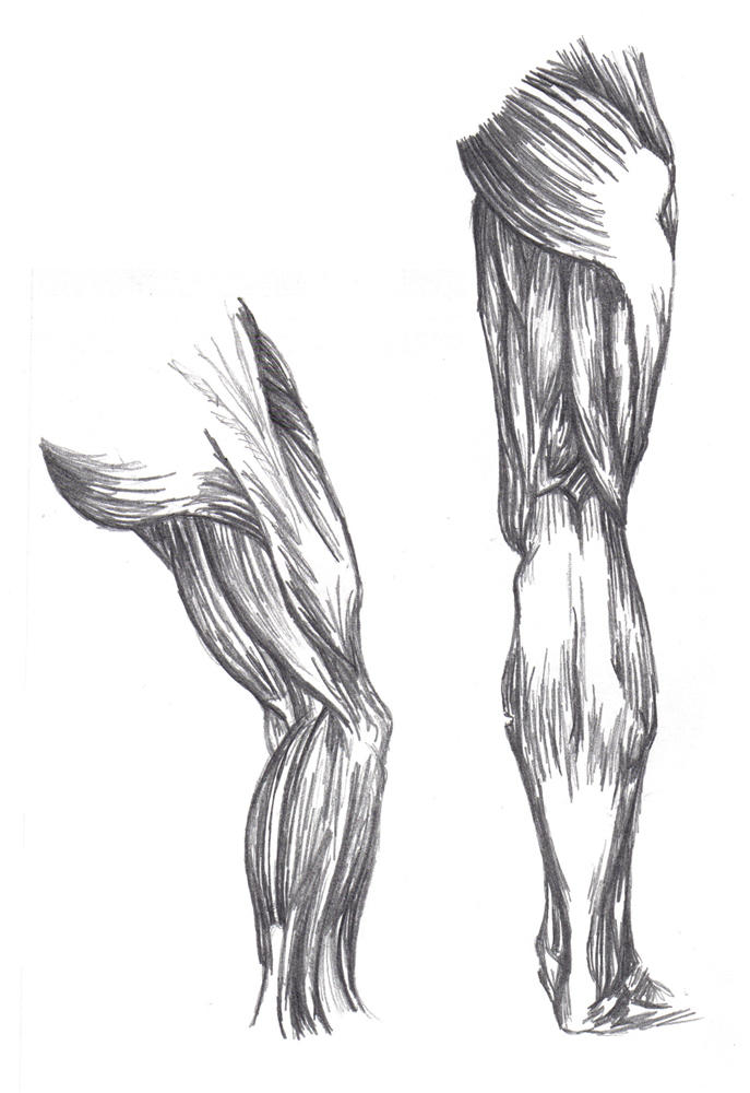 It's just a graphic of Witty Muscle Leg Drawing