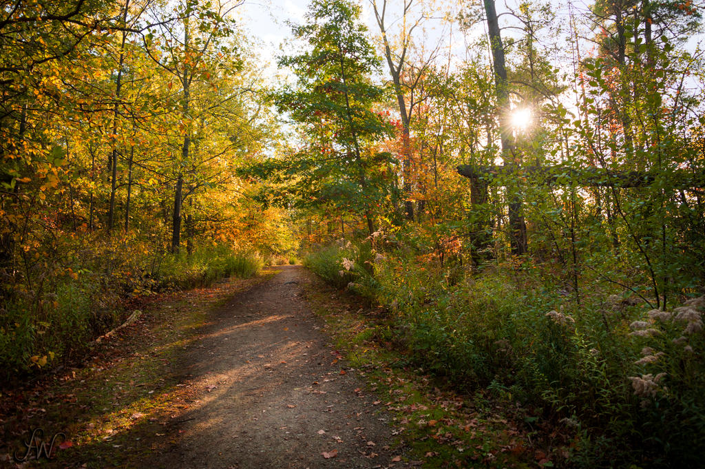Autumn Trail by waudrey