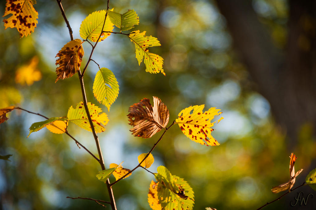 Leaves by waudrey