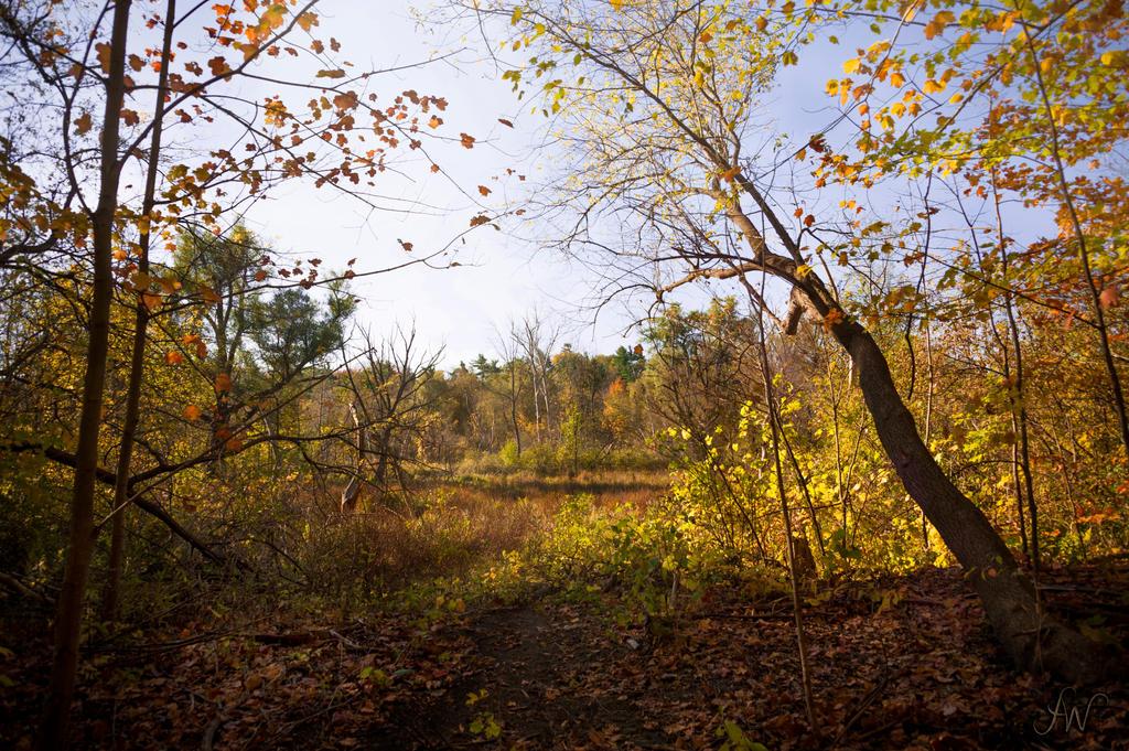 Autumn Scape by waudrey