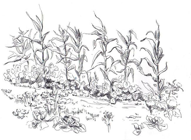 Corn Sketch Templates
