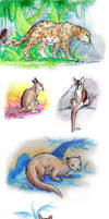San Diego Zoo Sketch-a-thon