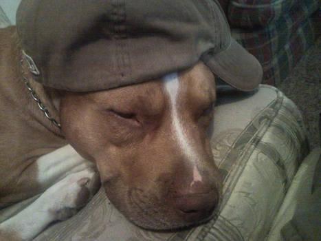 Kingston Sleeps with Hat 1