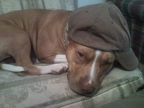 Kingston Sleeps with Hat 2
