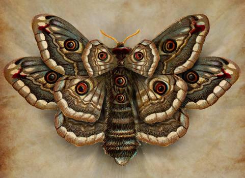 Lepidoptera cum omnia