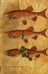 Surrealistic Nature Of Fish
