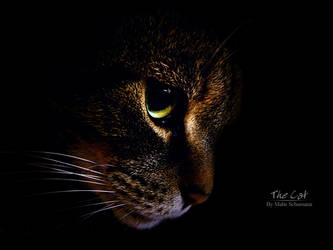 The Cat by malte06