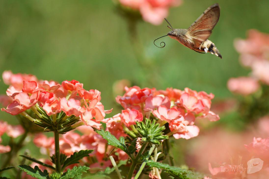 Nectar tasting by trollwaffle