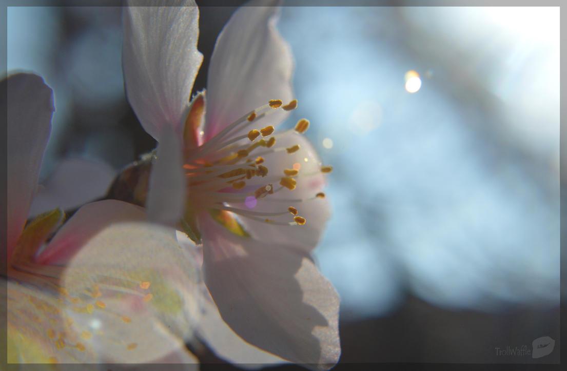 Beautiful spring by trollwaffle