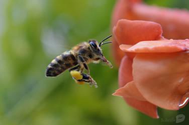 Bee by trollwaffle