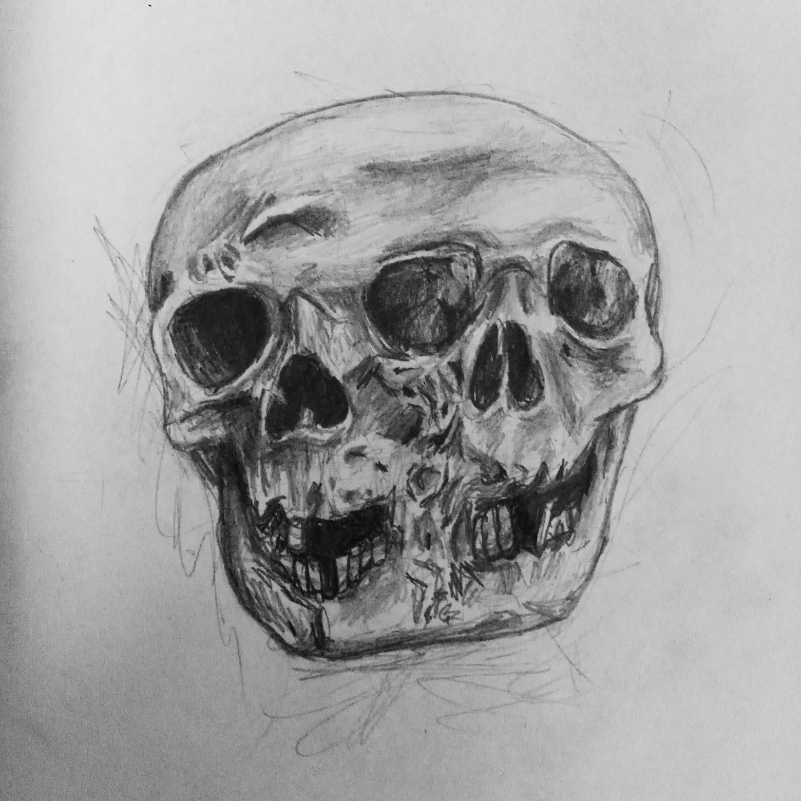 Fused skull sketch
