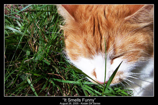 It Smells Funny