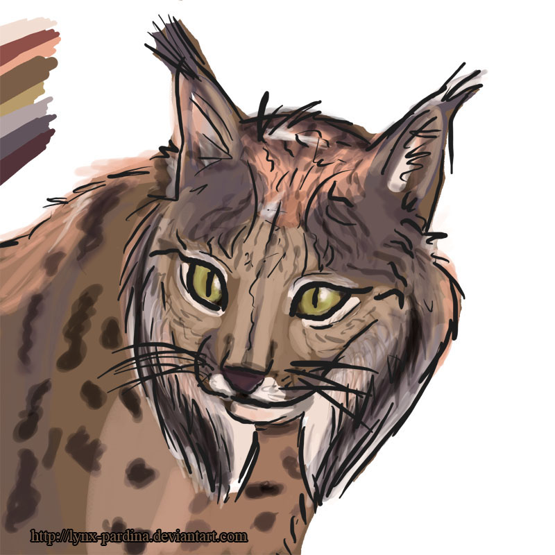 Lynx-Pardina's Profile Picture