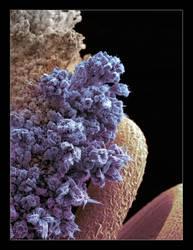 Urus micrographie 4 by Urus-28