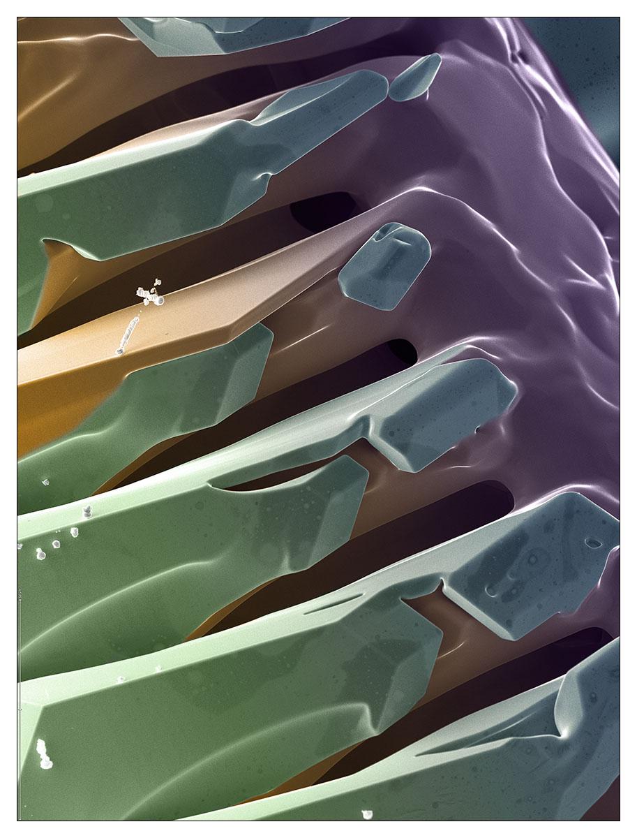 Urus Micrographie 50