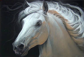 White Horse by ipstudio