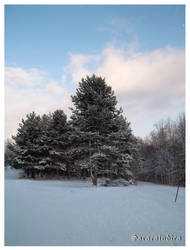 Trees - covered with snow
