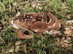 Lost Baby Deer