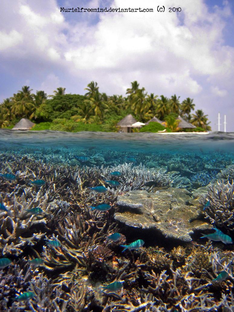 Maldives -  Underground by MURIELFREEMIND