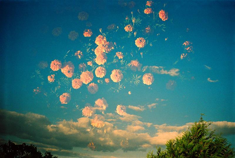 sky_flowers by e-112