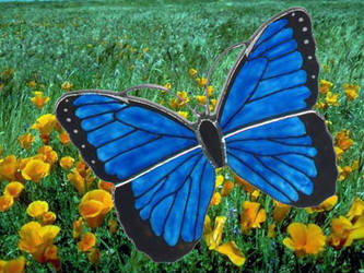 blue butterfly by toroj