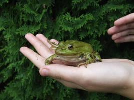A Frog Prince by YvaineGlareStock