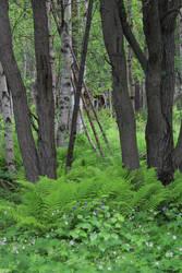 Norwegian Forest Background STOCK
