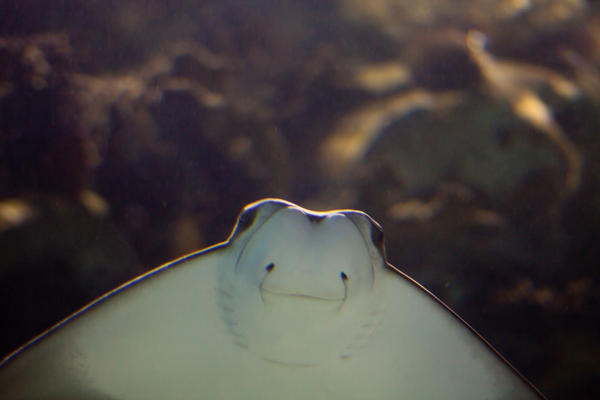 skylara's Profile Picture