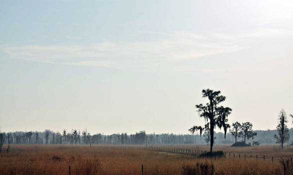 Disappearing Florida Landscape