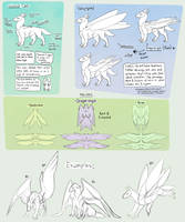 Caeli Wing Types - Visual Reference by ImperfectEnthusiast