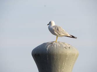 013_Gull by debzdezigns-lamb68
