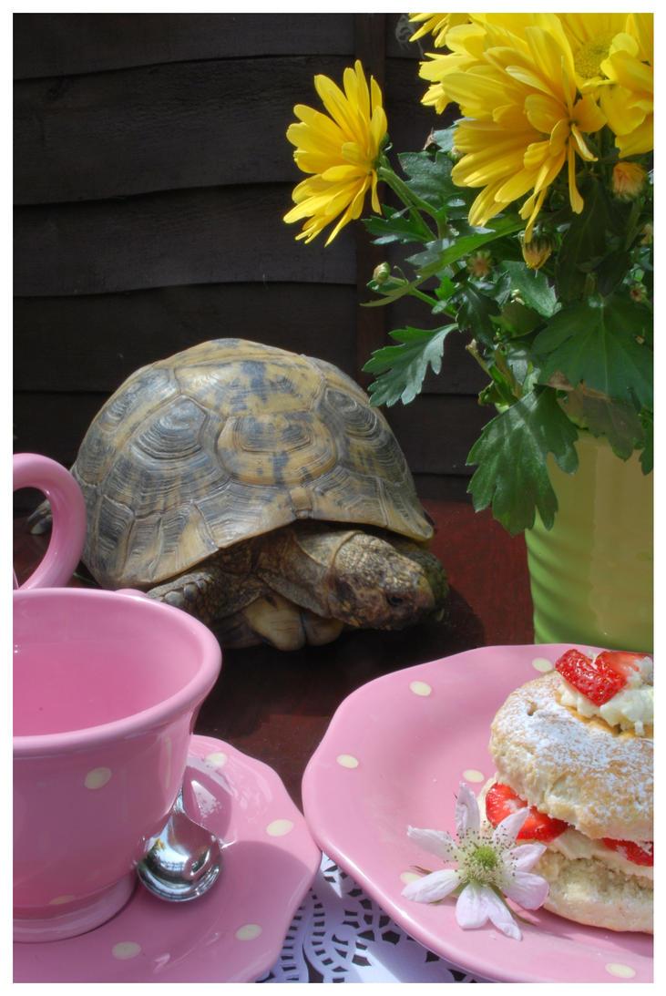 Tortoise for Tea by abandonedpants