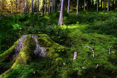 Hill in the Woods by NiquePhotography