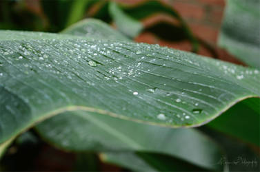 Raindrop by NiquePhotography