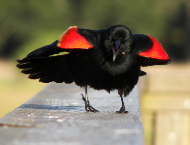 Diary of a Mad Blackbird 2 by illmatar