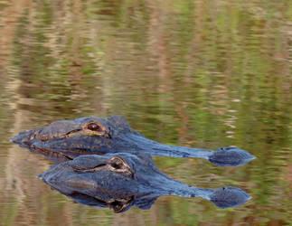 Surreal Gators by illmatar