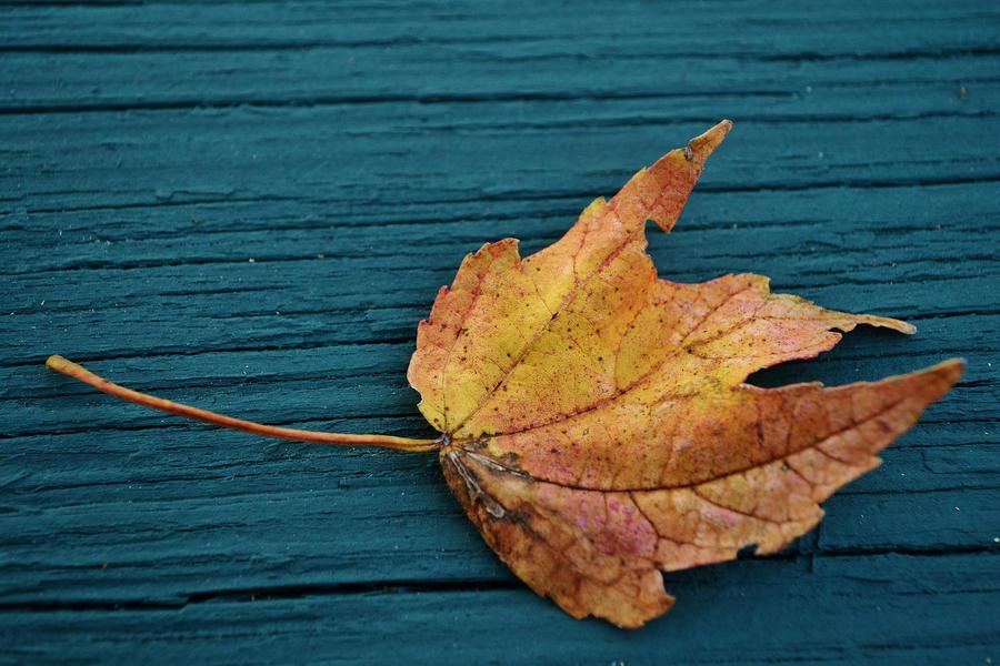 Maple leaf by blackroseangel89