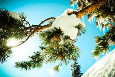 Colored Snow Tree by aytugcakir