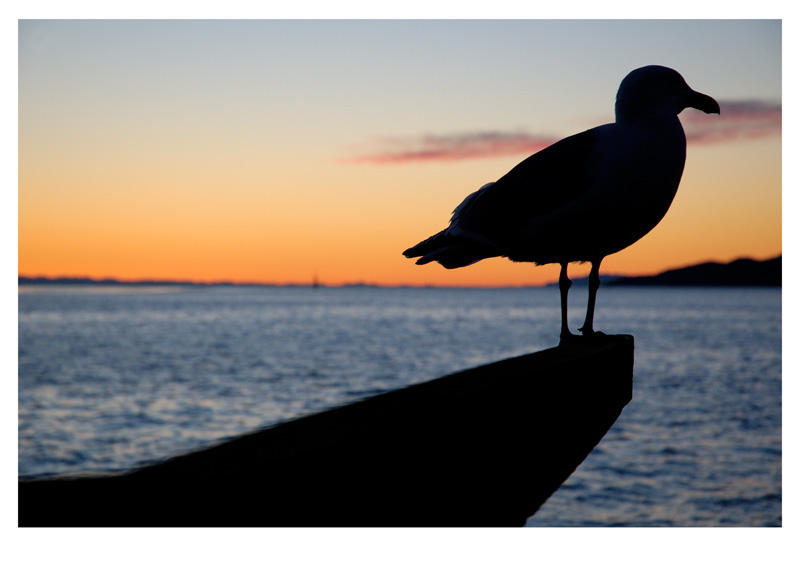 Seagull Silhouette by crazycroat on DeviantArt