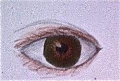 Eye by Animal-Amans