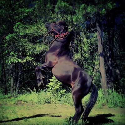 Pony by KlTTEN-KANDY